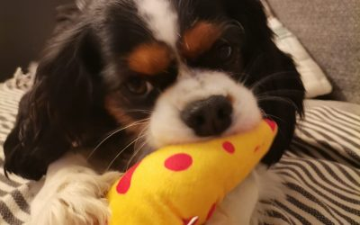 Peluche sur mesure Japhy pour chien
